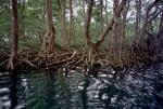 Manglares, Lagua de Gri Gri