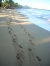 playa limon 3