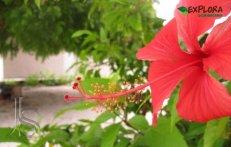 Flor Isla Saona