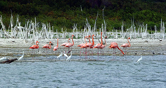Resultado de imagen para lago enriquillo republica dominicana