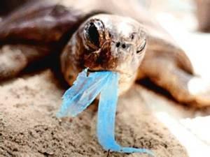 Tortuga comiendo bolsa de plastico