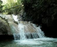 Rainforest Eco Tours