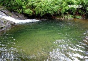 Arroyazo, Ebano Verde