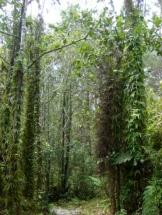 Bosque Cachote